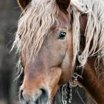 25 Horse Photography Tips Take Great Equine Photography