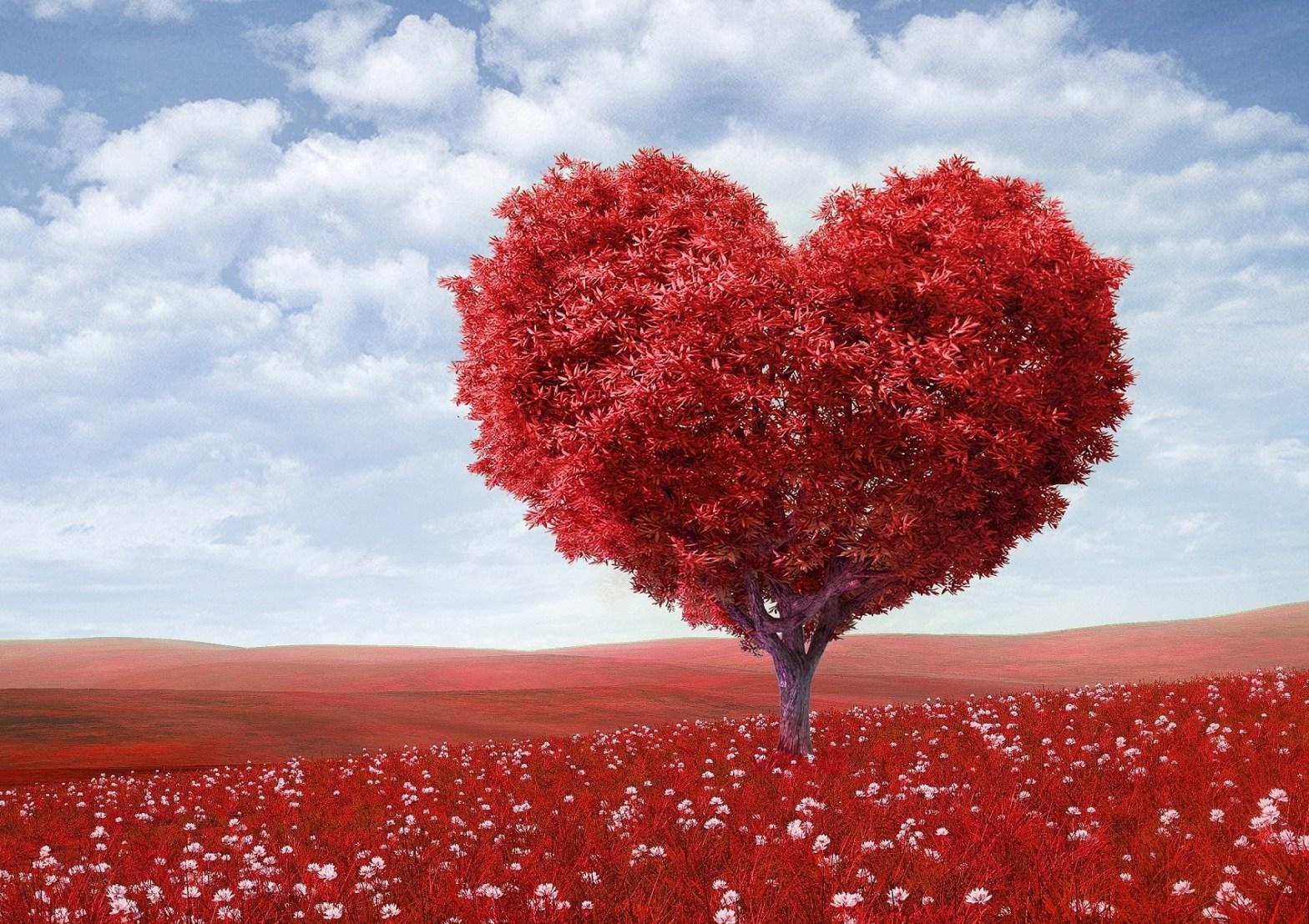 Love is a heart shaped tree