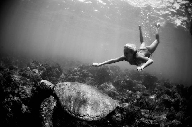 Amazing Underwater Photography