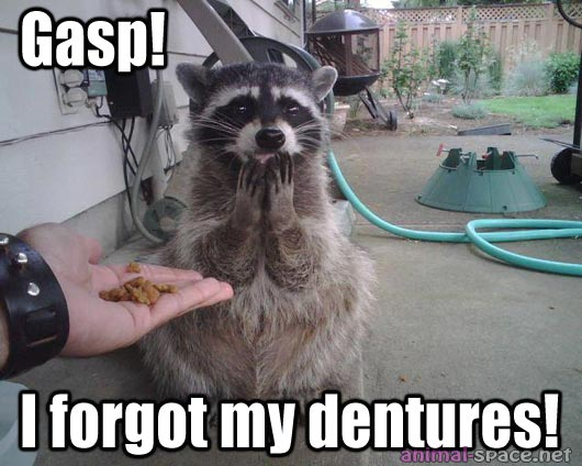 Funny animals here again (4)