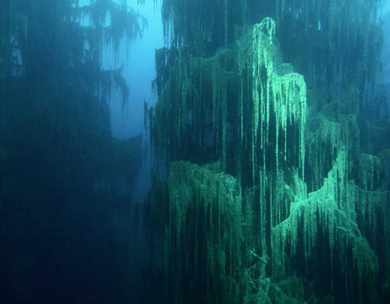 Craziest things in nature you wont believe actually exist