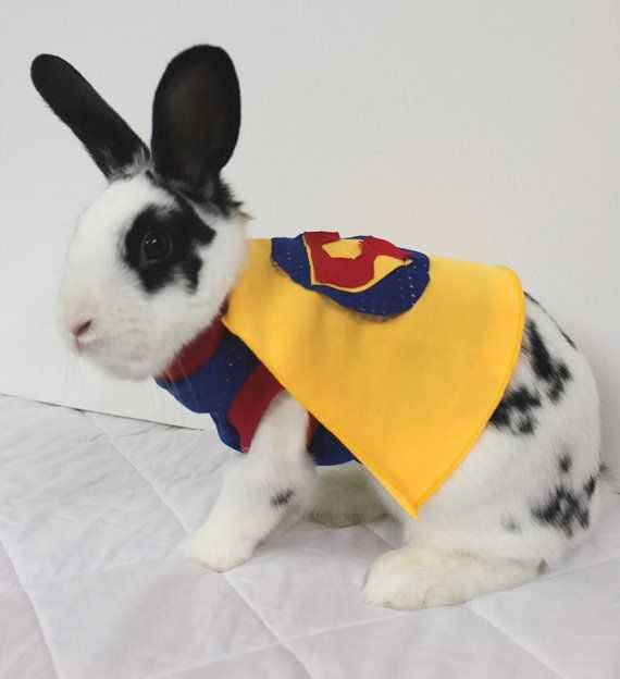 Animals In Costumes