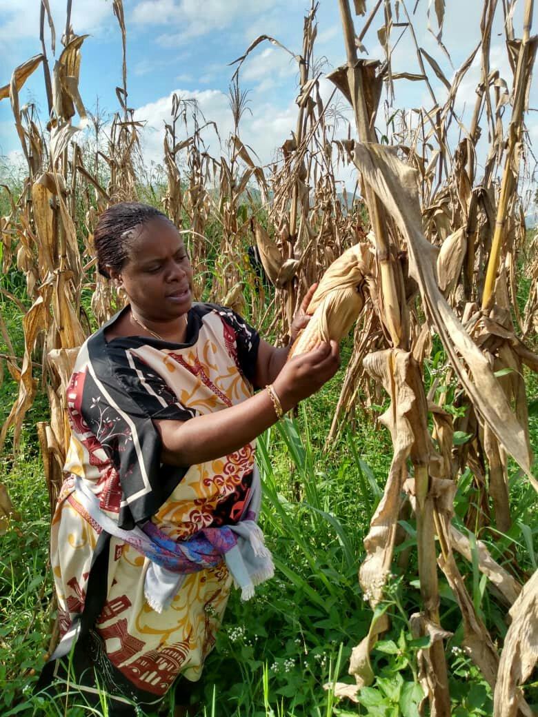Sud-kivu- agriculture: Madame Nabintu Zigabe Malago détérminée à  combattre la pauvreté tout en encourageant la population à  cultiver et à élever