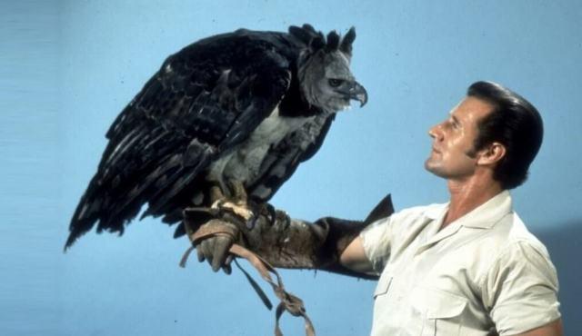 njeriu dhe shqiponja - ezopi