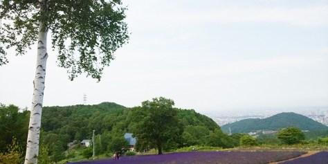 幌見峠ラベンダー園