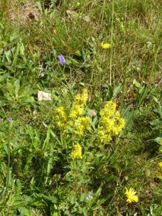 in dieser Gegend hier sind Blumenwiesen etwas ganz, ganz seltenes!