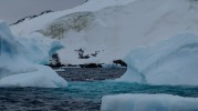 Icebergs and Gentoo penguins by Useful Island. Photo by Astrid Leitner