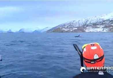 Snorkelen naar Walvissen in Noorwegen