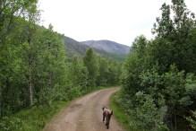 Heading into Nordalen