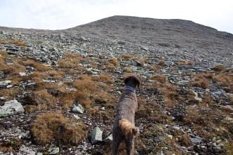 Boulder terrain!