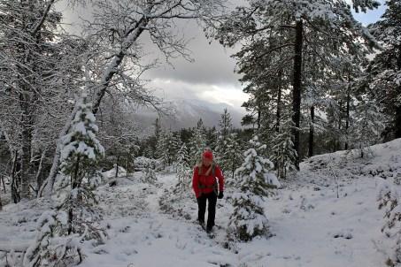 On the path towards Kyndilstjørni