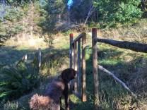 Through two gates