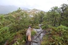Approaching the summit plateau