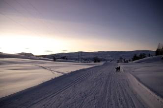 Great ski tracks on Utvikfjellet