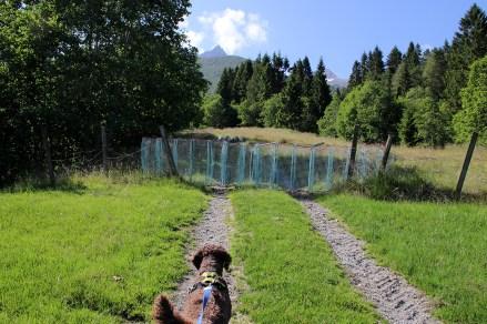 Sheep gate...