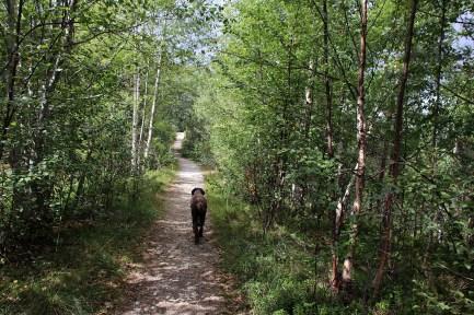 Path towards Hasleggi