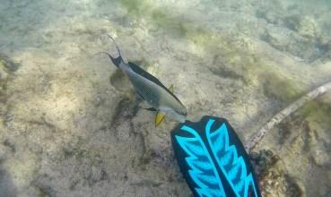 Curious fish