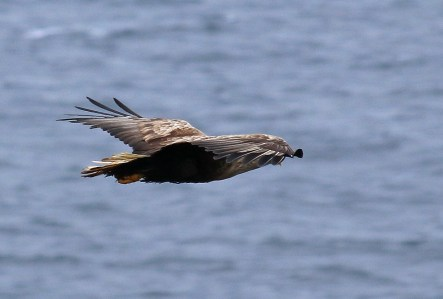 Eagle passing by