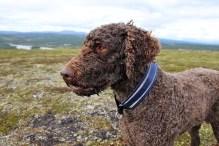 My loyal hiking buddy