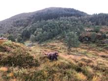 Terrible off-trail terrain