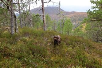 On top of Kolåsen