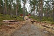 The trailhead in Festingsdalen