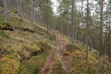 We followed this path for 1,6km