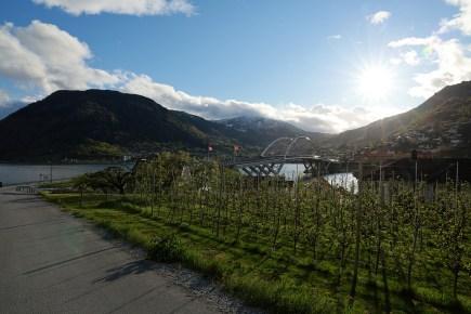 The Sogndal bridge