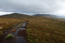 Still a bit to go (Haugsvarden to the left)