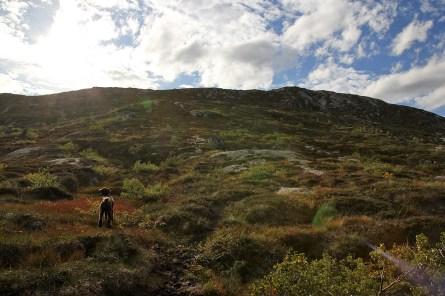 Up from Skjørdiket