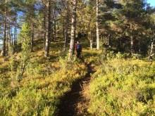 On a ridge