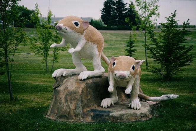 Kangaroo rats aren't really this big.