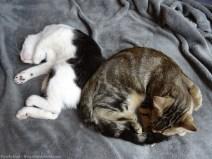 Deux petits chats pas vieux...