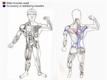 Prone Cobra Extensions Posture Correction