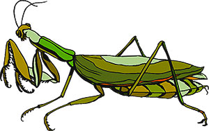 free insect clipart - animations