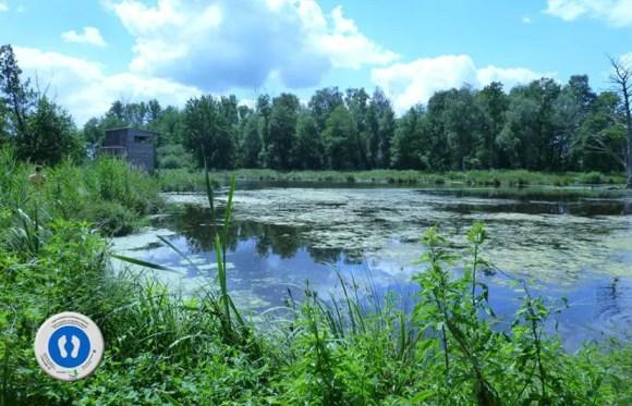 WasserBlick Rohrdommelfläche - Nette-Seen im Naturpark Schwalm-Nette am Niederrhein