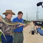 An anaconda's 15 minutes of fame. (Florida Fish and Wildlife)