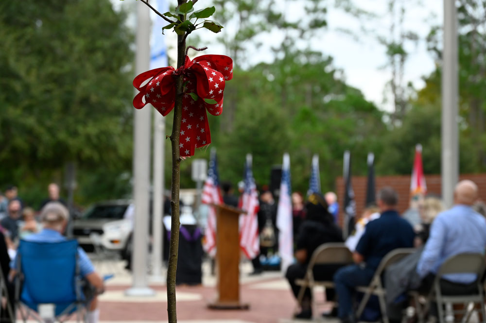 A sapling from the Survivor Tree at Ground Zero, now in Palm Coast's Heroes Park. It was dedicated during a 9/11 ceremony Saturday. (© FlaglerLive)