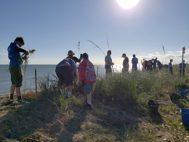 scouts replant dunes in flagler beach