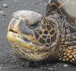 turtle talk gamble rogers