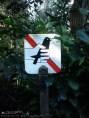 Deja a los pajaricos volar