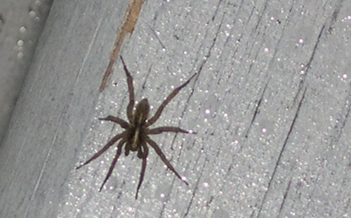 spider on deck