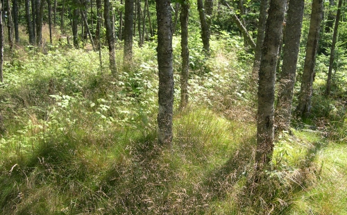 grass in woods