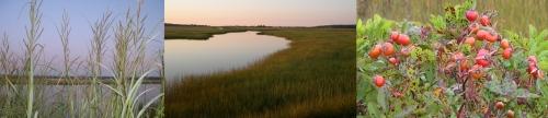 the marsh in september