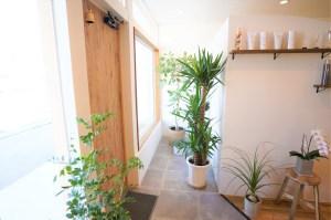 エントランスの観葉植物   FLANER   滋賀県米原市・長浜市・彦根市の美容室(ヘアサロン) フラネ