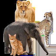 الحيوانات Icon 192x192