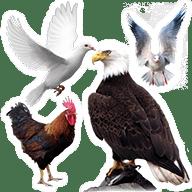 الطيور icon 192x192