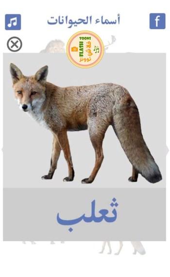 حيوانات الغابة - ثعلب