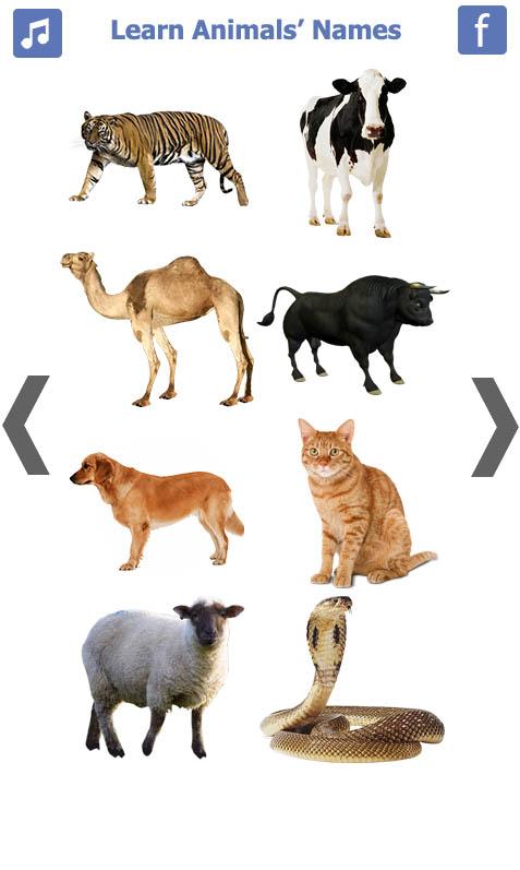 تعليم-أسماء-الحيويانات-باللغة-الانجليزية-2