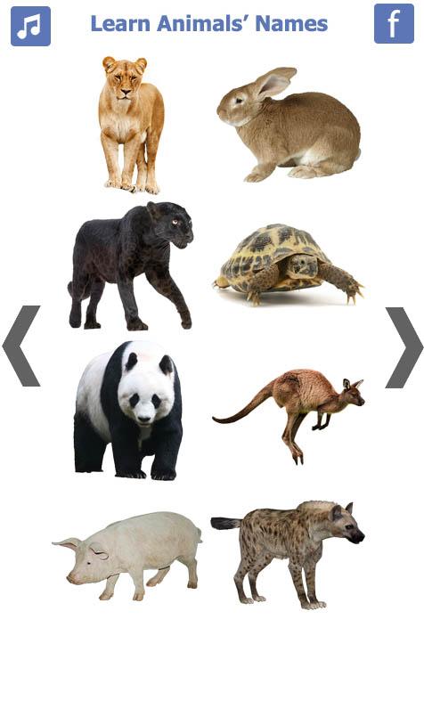 تعليم-أسماء-الحيويانات-باللغة-الانجليزية-4